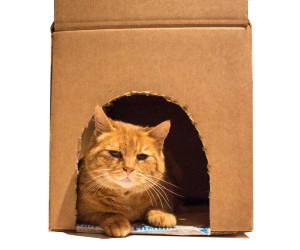 Katze im Wellpapp-Haus