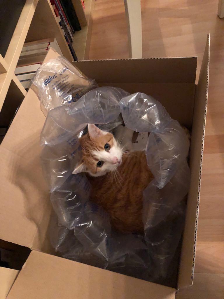 Katze im Karton mit Luftpolsterfolie